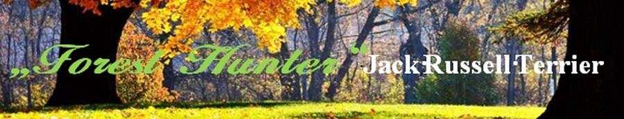 Forest Hunter - Jack Russell Zucht im Innerstetal